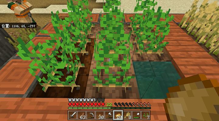 畑のジャガイモ