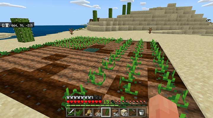 植えられたジャガイモ