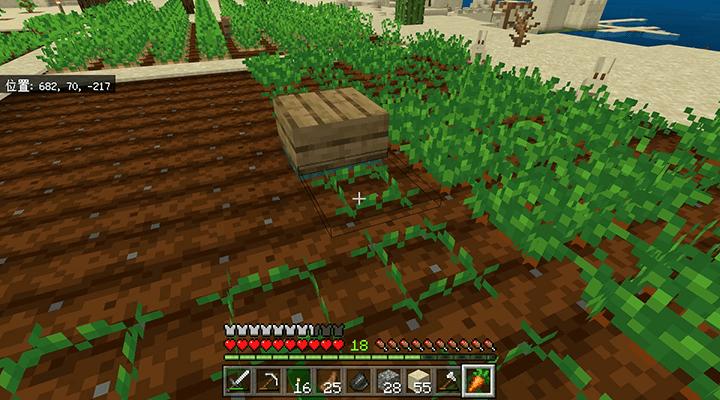 植えられたニンジン