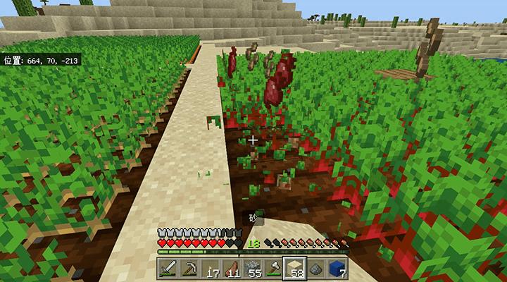 収穫されるビートルート