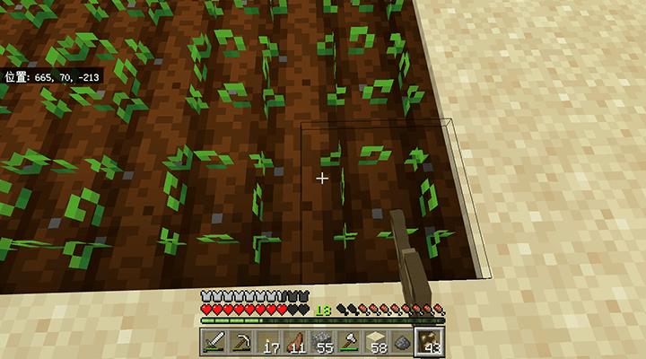 植えられたビートルートの種